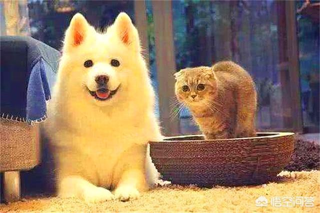 狗科跟猫科的动物互相结合能产仔吗?是否违背生物规律?